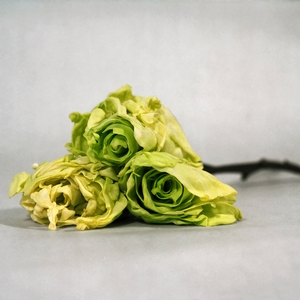 Cabbage Patched, 2012
