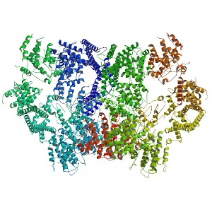 Yeast dynein motor protein domain<br />Photo: