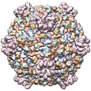 Cypovirus capsid<br />Photo: